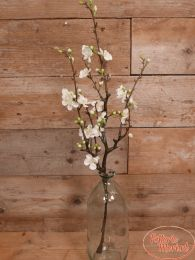 Bloesemtak Quince XL wit